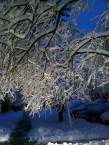 Frost on Trees at Viviana's House